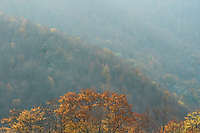 Common beech forest (Fagus sylvatica) at the Valle Zeperna, Basilicata/Calabria, Pollino National Park, Italy. November 2008. Mission: Pollino National Park