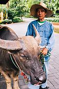 Water buffaloes at Four Seasons Resort, Chiang Mai
