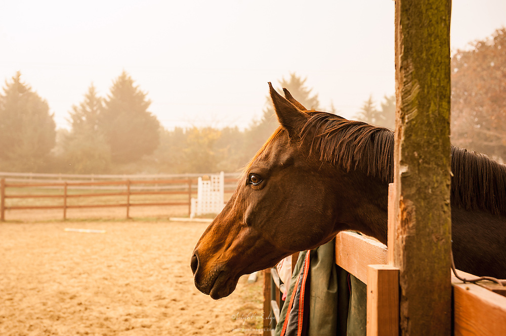 One of the beauties during an autumn morning fog at Ivy Hill Farm.