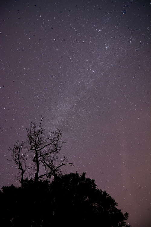 My first attempt at photographing the milky way.