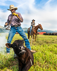 Keeping it western in Star Valley Wyoming, Slim Clark and his daughter Cydnie make a good partnership in getting the cattle branded. <br /> <br /> Rights managed, stock.  Not to be used for anti-ranching interests.