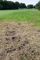 LEGEMEER - Schade en Overlast door  engerlingen op de baan. BurgGolf golfbaan St. Nicolaasga. COPYRIGHT KOEN SUYK
