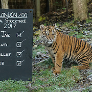 Annual stocktake at ZLS London Zoo 2017