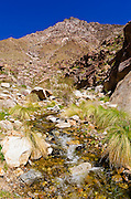 Stream in Borrego Palm Canyon, Anza-Borrego Desert State Park, California USA