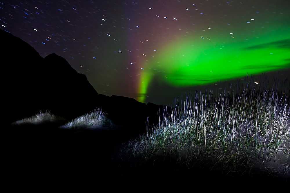 The aurora borealis appears above tufts of grass growing from the dunes on Bunes Beach, Moskenesoya, Lofoten Islands, Norway.