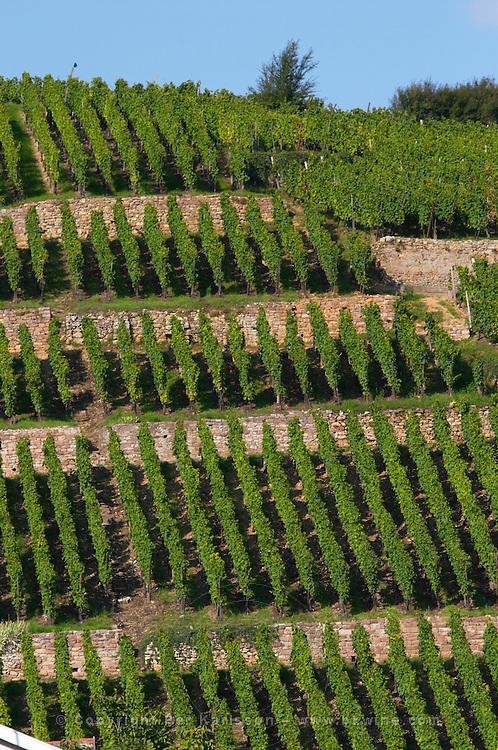 vineyard geisberg grand cru ribeauville alsace france