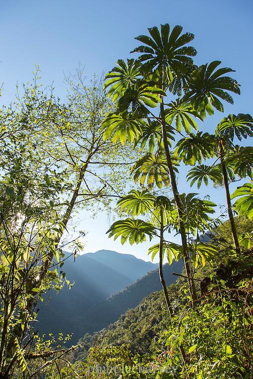 The Cloud forest, Manu National Park, Peru, South America