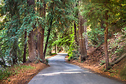 Pfeiffer Big Sur State Park, camp road winding through the trees, Highway 1, California