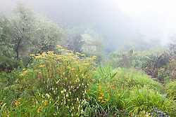 The brick garden at Glebe Cottage on a misty August morning