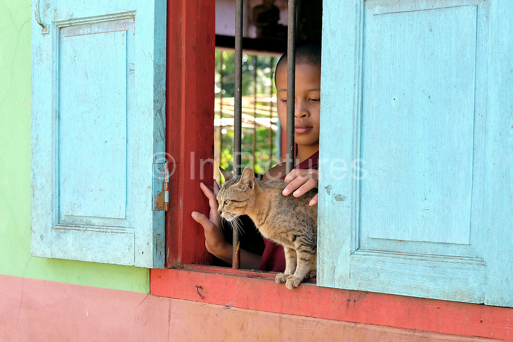 A young novice monk strokes a cat sitting at the window of a colourfully painted Buddhist temple in Kone Soth, a PaO Black Karen ethnic minority village in Kayah State, Myanmar on 18th November 2016