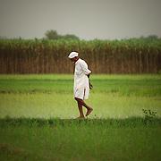 A farmer in his field, Punjab, India