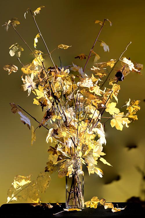autumn season colored leaves floral bouquet composite