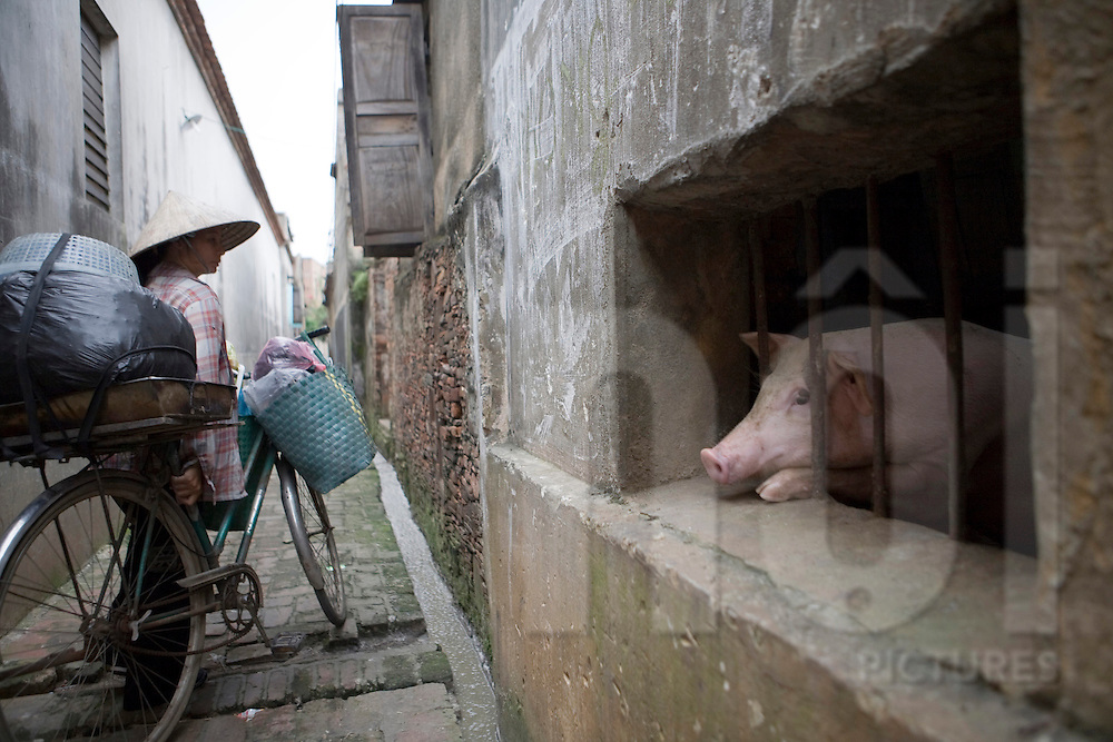 Color film photograph of a Vietnamese vendor walking her bicycle past a pigsty built into house framework in Tho Ha Village, a craft village specialized in making rice paper cakes with a history of pottery ware production, Hanoi outskirts, Vietnam, Southeast Asia