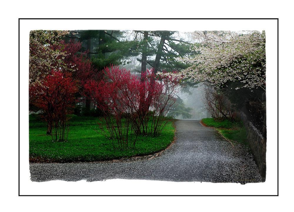 New York Bronx Botanical Garden path