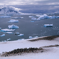 ANTARCTICA. Photographer above gentoo penguin colony on Cuverville Island.