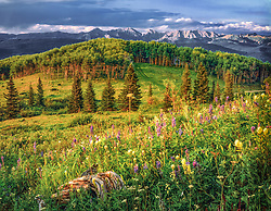 Horizontal image of McCoy Par, near Beaver Creek Colorado, looking down and across green summer meadow with wildflowers foreground and fir and aspen trees mid and background, taken in late afternoon in very warm light with Gore Mountains as background