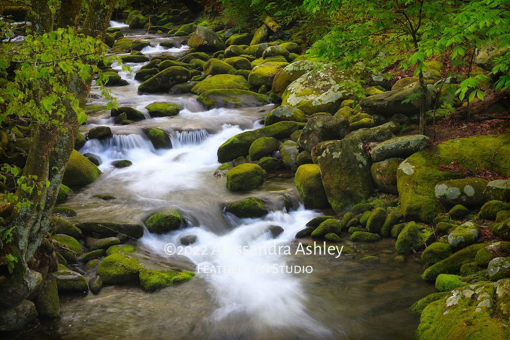 Roaring Fork mountain stream surrounded by spring green foliage and mossy rocks. Viewed from the Roaring Fork Motor Nature Trail, Great Smoky Mountains National Park near Gatlinburg, TN.