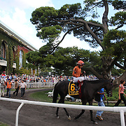 Horses parade in the parade ring at Belmont Park during the Jockey Club Gold Cup Day, Belmont Park, New York. USA. 28th September 2013. Photo Tim Clayton