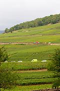 chardonnay vineyard corton hill aloxe-corton cote de beaune burgundy france