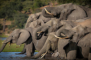 Best of The Chobe Gallery