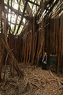 A boy stands amongst hanging vines at the Anping Tree House in Tainan, Taiwan.