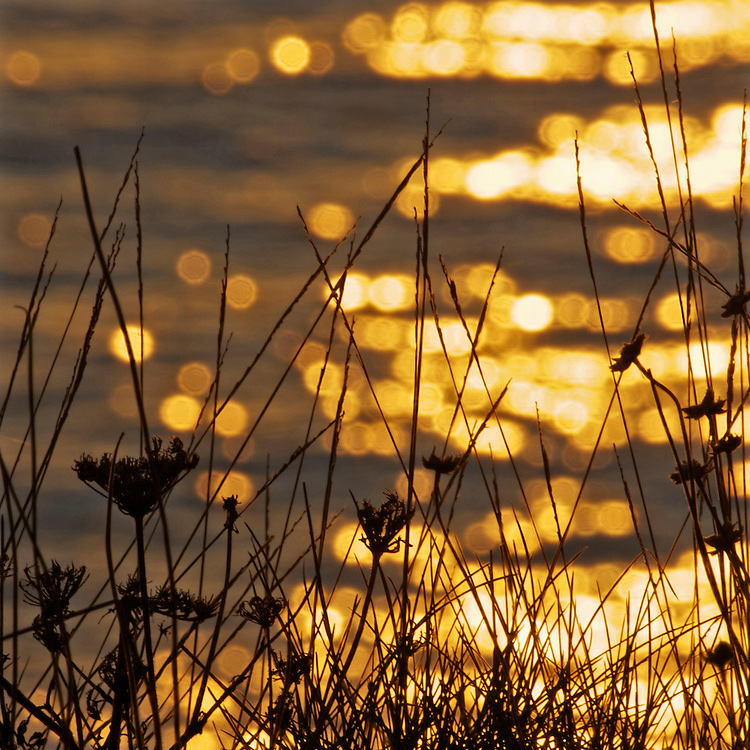 Bokeh experiment - Clifftop shot, evening light shimmering on the sea a few hundred feet below the cliffs at freshwater bay
