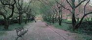 New York City, Cental Park, Conservatory Garden, New York, path crab apples