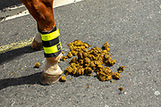 The rear legs of a police horse next to fresh horse manure on Whitehall during the Stop The Coup protest against the proroguing of Parliament on 31st August 2019 in London in the United Kingdom. Left-wing group Momentum and the Peoples Assembly coordinated a series of Stop The Coup protests across the UK today, aimed at Boris Johnson and the UK government proroguing Parliament.