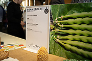 Bean (Pole), Phaseolus vulgaris<br /> Showcase: 'Aunt Ada's Italian' Pole Bean<br /> Breeder: Lia Babitch, Turtle Tree Biodynamic Seed Chef: Sam Smith, Tusk
