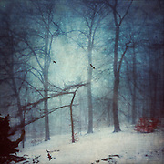 Misty winter day in a park - texturized and manipulated photograph<br /> <br /> Prints & other products:<br /> http://society6.com/product/faint-forest_print#1=45