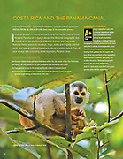 Squirrel monkey in forest canopy. Published in NG/Lindblad Expeditions magazine