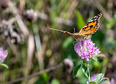 Butterfly and Moth Royalty Free Stock Images