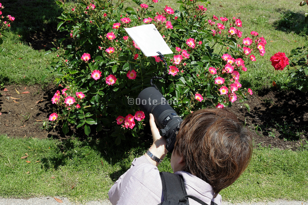 person photographing flower