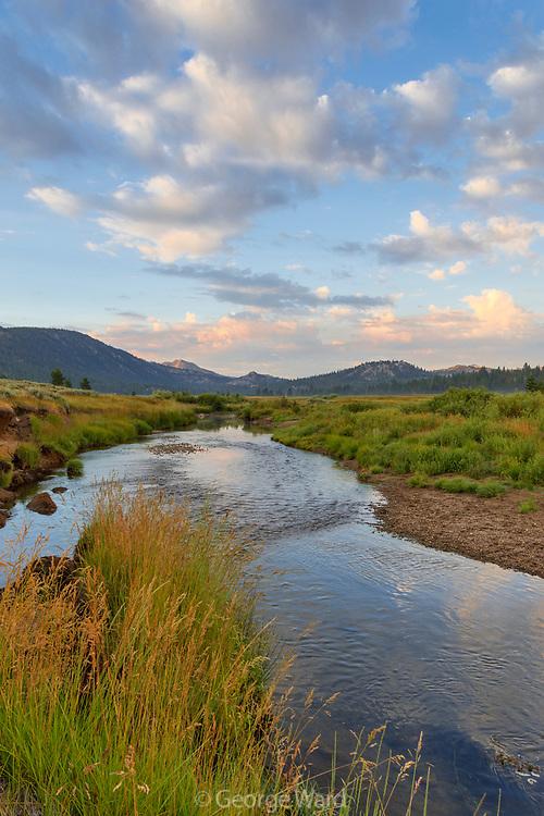 Carson River and Grasses at Dawn, Eldorado National Forest, Alpine County, California