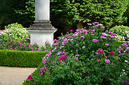 A variety of Rosa around an obelisk at Chiswick House Gardens, Chiswick House, Chiswick, London, UK