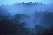 Mist rising in Jungle, Rainforest, Morning, Mount Kinabalu Mountain, Sabah, soft colours, evocative, treetops