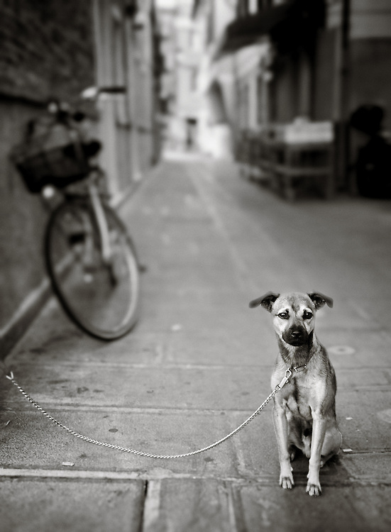 Italy - Chioggia - Lone dog on street BW