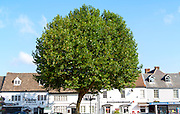 Tree, blue sky, Historic shops in the market place Highworth, Wiltshire, England, UK
