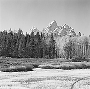 Meadow, Trees And Cathedral Group, Grand Tetons