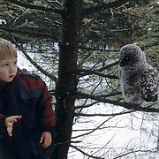 Great Gray Owl (Strix nebulosa).  Seven-year old Colter Hyde with a fledgling chick in Montana.