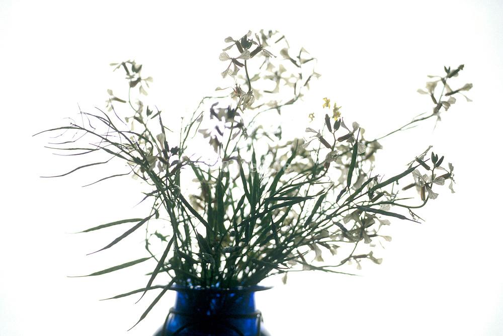 arrangement of wild flowers in a vase