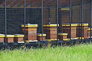 Nederland, Nijmegen, 12-6-2016 Bijenkasten staan in een nieuw onderkomen in het Goffertpark. In elke kast zit in de zomer een bijenvolk met bijen die honing produceren . Foto: Flip Franssen.
