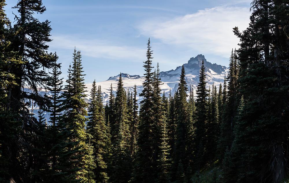 Looking through a forest towards Little Tahoma from the Burroughs Mountain trail, Mount Rainier National Park, Washington, USA.