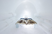 Ice Hotel amazing suites entirely made of ice and snow<br /> <br /> ICE HOTEL, 19 individually themed and hand crafted art suites have been newly designed by creatives from across the world – from a swedish artist who made a giant snow elephant in the room, to a french team who fused snow, ice and disco into a groovy sleeping experience. each year, the hotel creates a new series of artist-designed accommodation spaces that add to the existing landscape of  private rooms.<br /> <br /> the amount of snow used to create its more than 50 bedrooms, church and a bar would make 700 million snowballs, while the chandeliers alone are made from 1,000 hand cut ice crystals. thematically, this year's edition features flocks of animals from elephants to peacocks, patterns drawn from nature, architecturally-motivated designs and theater-inspired schemes.<br /> ©icehotel.com/Asaf kliger/Exclusivepix media