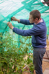 Putting up net shading material in a greenhouse