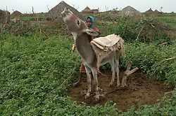"""Kadija's daughter Saidya, 11, gets their donkey ready to fetch water in Barentu, Eritrea August 25, 2006. Kadija is a traditional birth assistant as well as a recipient of a donkey from the women's union """"Hamade"""". (Ami Vitale)"""