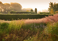 Yew hedge and ornamental grasses during a misty September sunrise at Waterperry Gardens, Waterperry, Wheatley, Oxfordshire