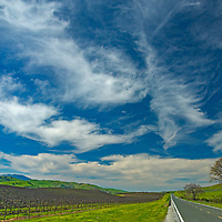 Vineyards line California Highway 25 between Hollister and Pinncles National Park in San Benito County.