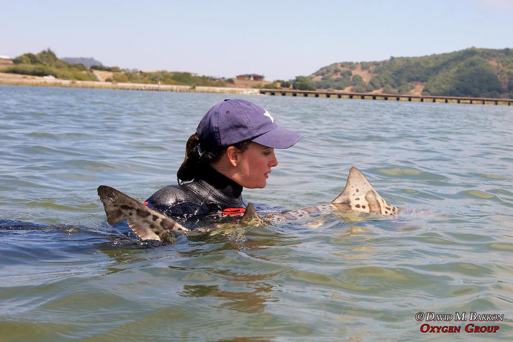 Melissa Miller Releasing Leopard Shark