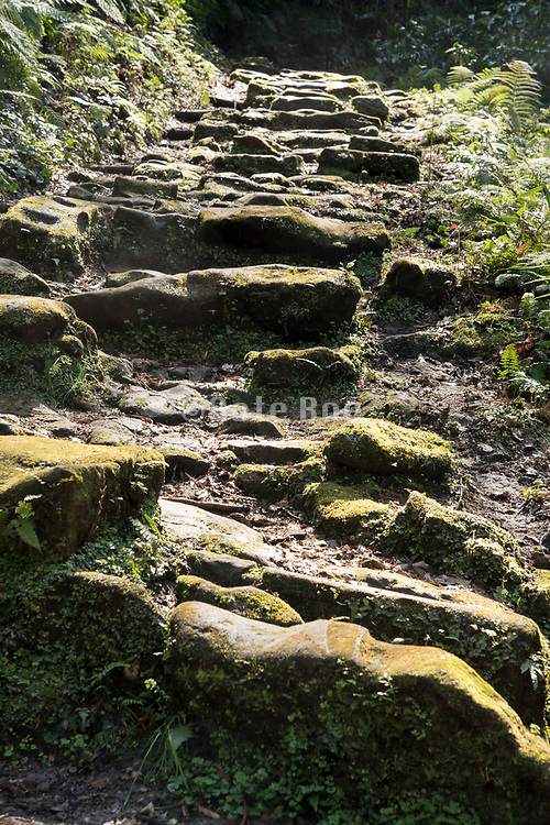 path with old stairs on a nature hiking course Japan
